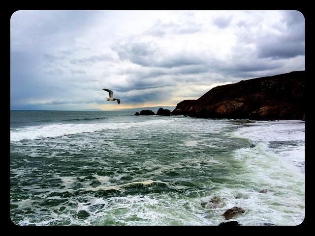 Seagull in Pacifica.