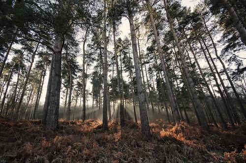 Birches Valley
