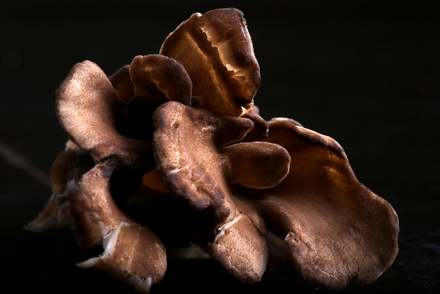 Maitake Bacon