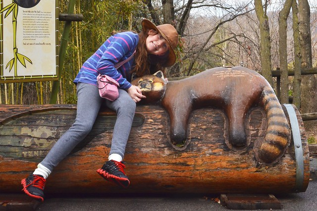 Caits and the Red Panda
