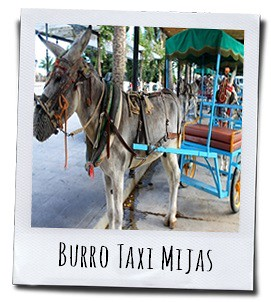 De ezel-taxi in Mijas