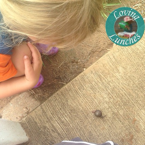 Loving visitors… Miss M found this little guy in the back yard 🐌
