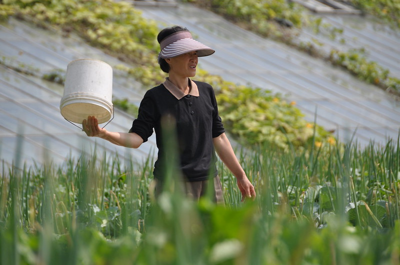 Chongsanri Cooperative Farm