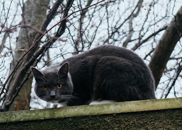 grey cat on wall