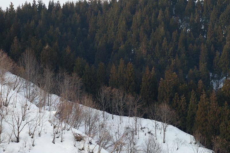 針葉樹と広葉樹_2014