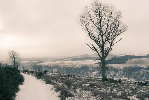 winter snow tree ice valley glenprosen tullochhill