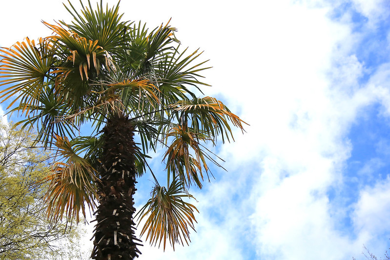 palmier madrid