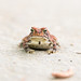Toad on the Road by Longleaf.Photography