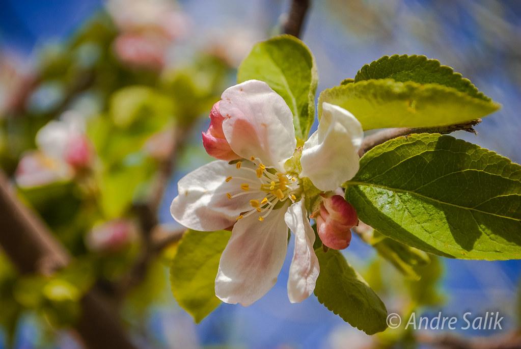 Wonderful blossom !