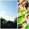 Dragonfly Squadron lift off! #singaporebotanicgardens #dragonflypower #naturewatching #sg #igsg