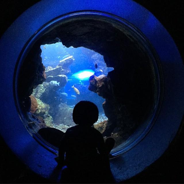 水槽と幼児。 #京都水族館 #kyotoaquarium #aquarium