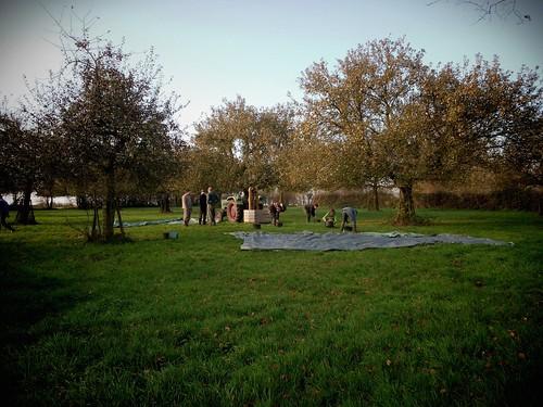 Récolte des pommes au soleil