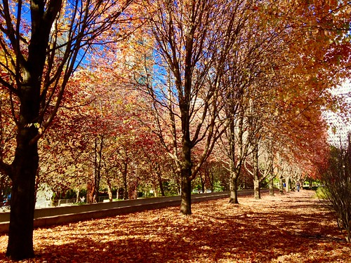autumn chicago fall leaves milleniumpark foliage fal