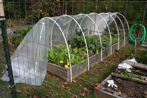 Skippys Vegetable Garden cutting greenhouse plastic to cover hoops