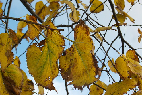 #Foliage con il cielo sereno