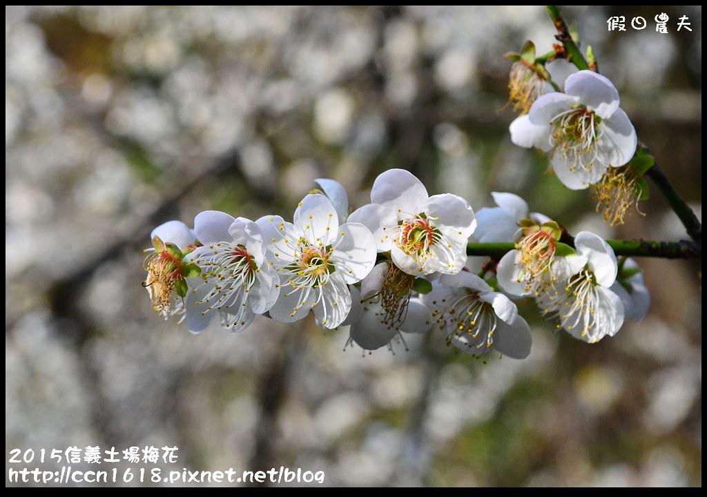 2015信義土場梅花DSC_9341