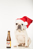Snuffle Dog Beer