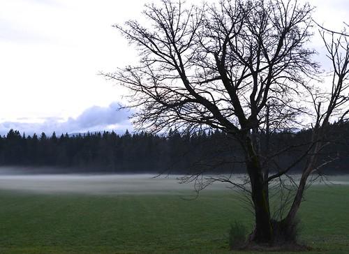 sunset mountain tree fog clouds nikon bc britishcolumbia grantham 19a d610 inlandhighway