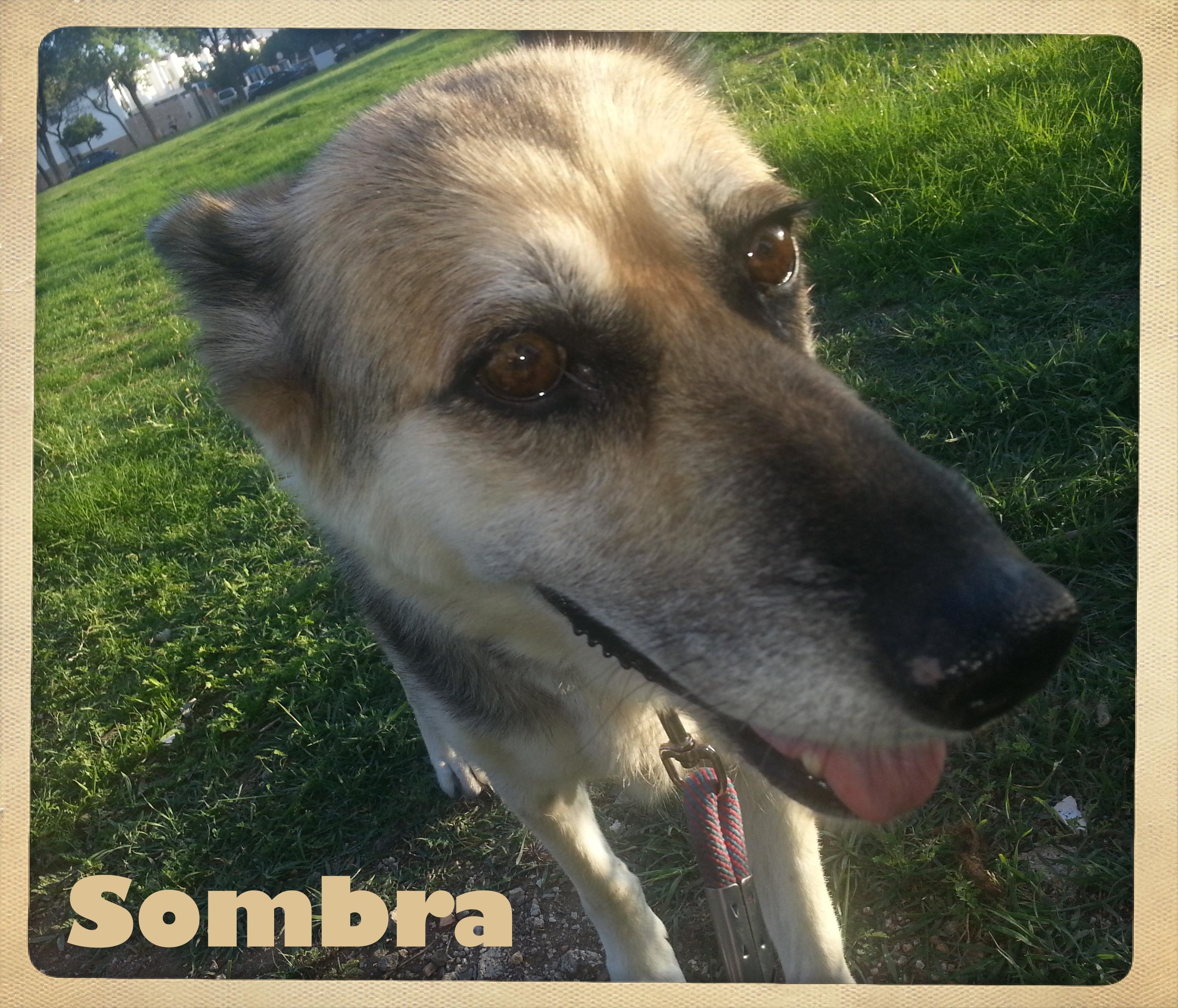 Sombra 3
