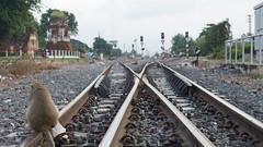 Railroads in Lopburi