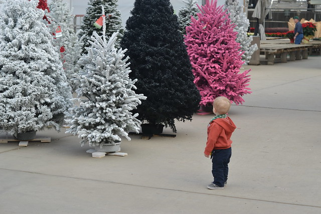 Finding our Flocked Tree