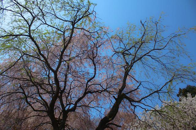 2014-04-19_00184_美の山.jpg