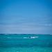 Paradis | Mathieu IMBERT | reecif.com