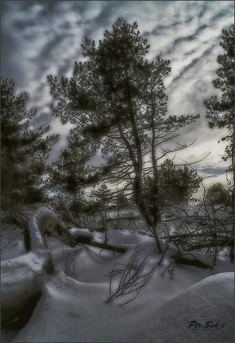 trees winter snow forest europe reserve ukraine pines artphotography landscapenature khortytsya