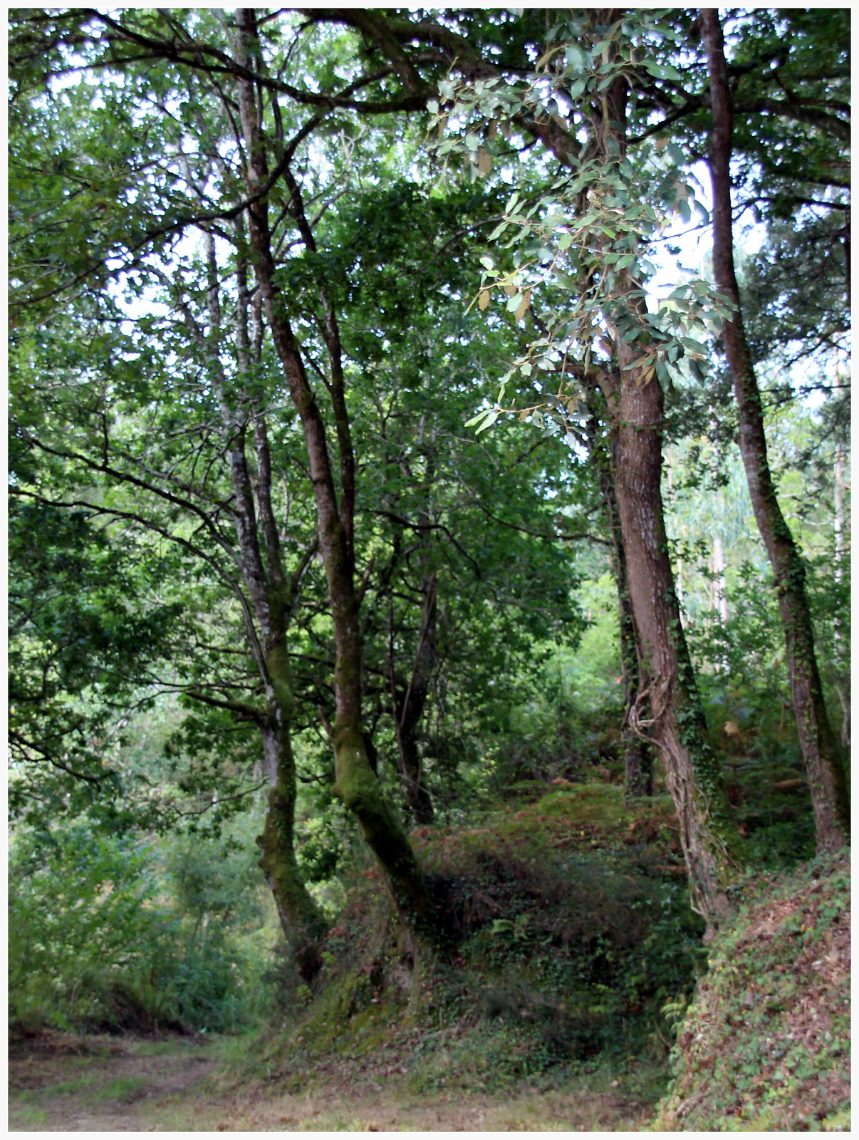 Valle de Liendo. Cantabria