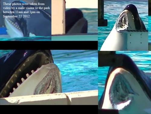 Blackfish Documentary - Free Whales in Captivity