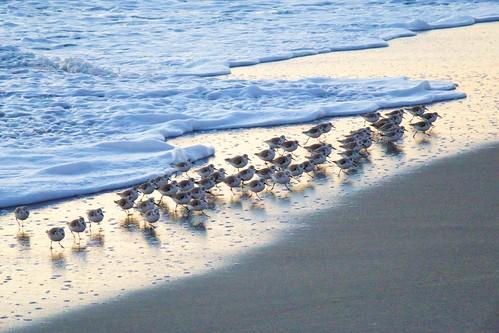ocean beach sunrise dawn surf florida indialantic