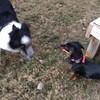 puppy play at grandma's
