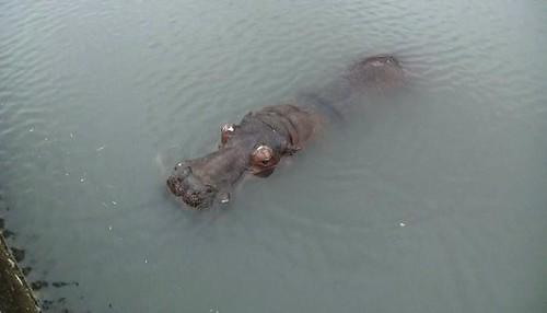 阿河的意外突顯動物運輸與展演的管理疏失