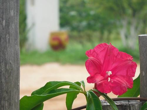 #meuolharemfotos #ednelsonsantosfotografia #fotododia #fotografia #photography #natureza #naturephotography #flowerphotography #flowers #fazendafiori #paripueira #alagoas