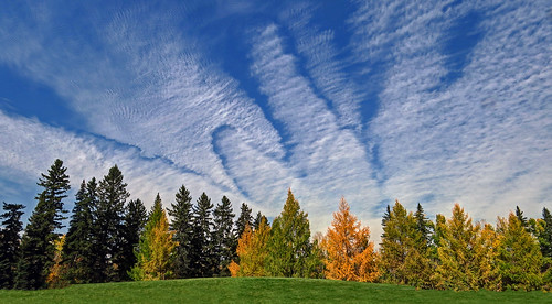 autumn calgary nature landscape scenic cloudscape bakerpark fantasticnature goldenlarches
