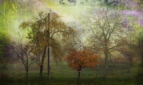 Őszi hangulat / autumn mood /