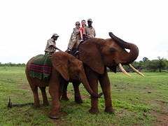 mare(0.0), animal(1.0), indian elephant(1.0), elephant(1.0), elephants and mammoths(1.0), herd(1.0), mahout(1.0), safari(1.0),