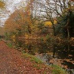 Neath Canal 19th Nov 2014 (6)