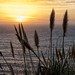 Pampas Grass Sunset _MG_3546 by Rob DeGraff