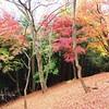 落葉🍁🍂🍂 #奥武蔵 #伊豆ケ岳 #紅葉 #落葉 #autumn #mountain #japan