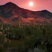 Saguaro National Forest at Sunset - Tucson