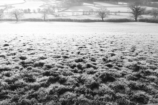Frosted Fields from Flickr via Wylio