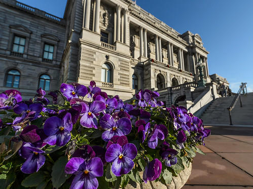 Purple at the Library of Congress by Geoff Livingston