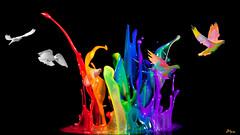 Vol en couleurs