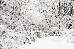 Winter 2014-15