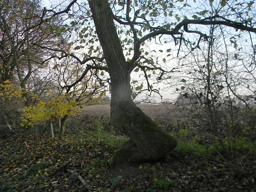 Zig zag tree