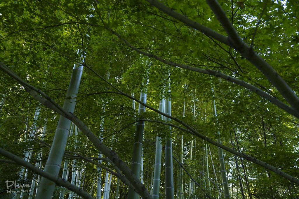 Shirotori Garden-16