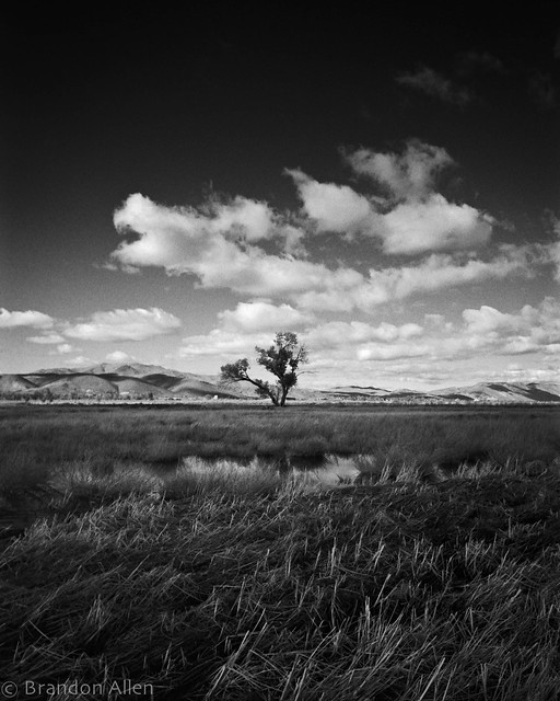 Marshes Tree and Clouds