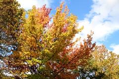 Herbst in Krefeld