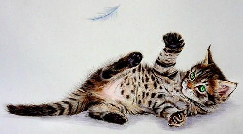 котенок и перышко-1